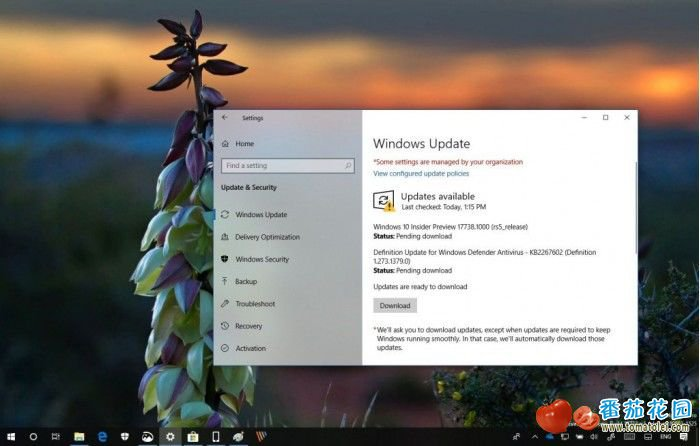 Fast通道迎Windows 10 Build 17738版本更新